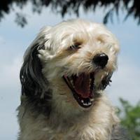 Misty yawning